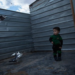 Eyad's little 2-year-old son, Zaid, playing around with the pigeons in the front yard of the caravan, where Eyad is keeping his pigeons.  Photo: NRC/Hussein Amri